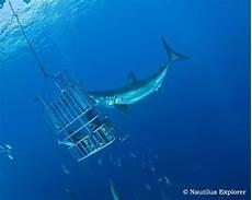 gabbia squali great white shark cage diving isla de guadalupe mexico