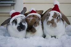 christmas fuzzy today