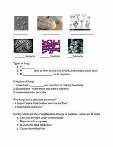 science bacteria worksheets 12135 science worksheet fungi bacteria teaching resources