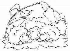 Ausmalbild Hase Und Igel Malvorlagen Igel Zum Ausdrucken