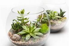 piante grasse in vaso piante grasse da esterno e interno quali differenze ci sono