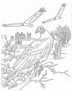 animals in the desert coloring pages 17026 17 best images about boats on sailing ships coloring pages and