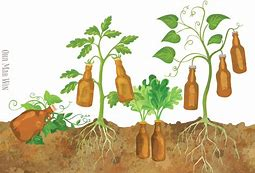 Image result for image beer growing in garden