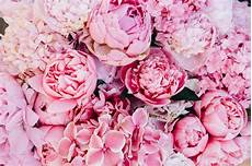 pink wallpaper pink peonies background nature photos creative market