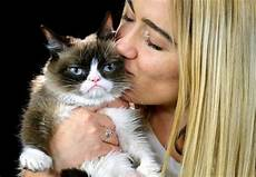 Gambar Kucing Berwajah Cemberut Marah Judes Sekaligus