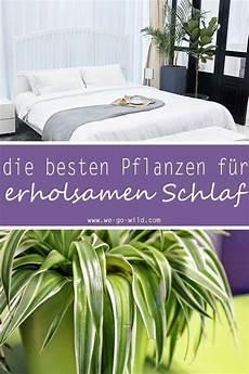 Pflanzen Im Schlafzimmer 9 Luftreiniger Helfen Beim