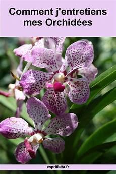 l entretien des orchid 233 es ou plut 244 t comment j entretiens