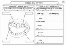 science worksheets year 4 12476 year 4 science animals including humans digestion teeth and food chains worksheets human