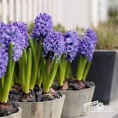fiori bulbo bulbi autunnali floricoltura quaiato