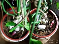 Diy Urlaubsvertretung F 252 R Eure Pflanzen 5 Tipps Dass
