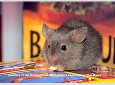 new mexico pest control association