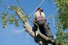 devis elagage arbre prix de l 233 lagage des arbres 2019 travaux
