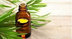 l huile d arbre à thé comment utiliser l huile essentielle d arbre 224 th 233 bio