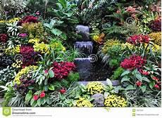 fiori a cascata fiori e cascata immagine stock immagine di giardinaggio