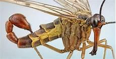 Insectes Bizarres Cabel Kawan