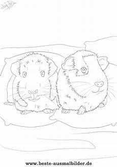 Meerschweinchen Ausmalbilder Malvorlagen Ausmalbilder Malvorlagen Und Ausmalbilder Zum Thema
