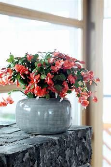 10 plantes d int 233 rieur fleuries et faciles 224 vivre gamm vert