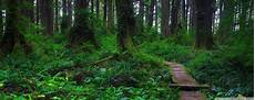 Forest Dual Monitor Wallpaper forest dual screen wallpapers top free forest dual