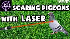dispositif anti pigeon anti pigeon laser