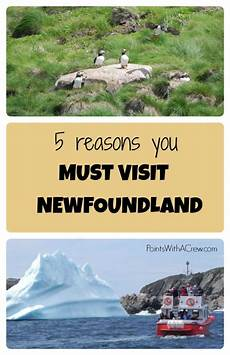 5 reasons you must visit newfoundland points with a crew
