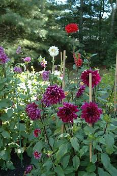 deborah jean s dandelion house and garden how to plant