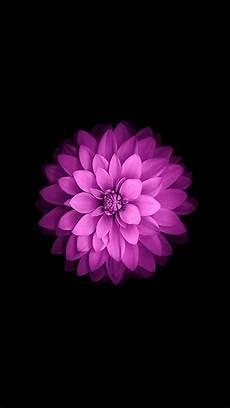 iphone purple flower wallpaper iphone 5 wallpapers hd retina ready stunning wallpapers