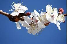 dei fiori battesimo inviti battesimo fai da te immagini da stare