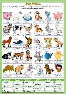 animals and their worksheets 14100 animals and their babies interactive worksheet