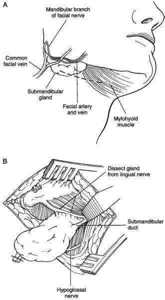 Nanos Gigantium Humeris Insidentes