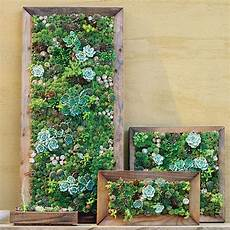 To Make Vertical Garden Indoor Living Wall by Make Your Own Living Succulent Living Walls Robins
