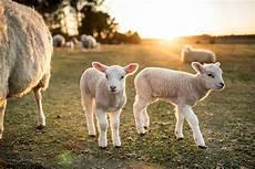 animaux de la ferme farm animals stock photos pictures royalty free images