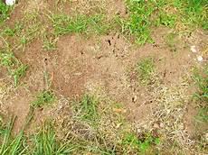 Viele Ameisenkolonien Im Rasen Mein Sch 246 Ner Garten Forum