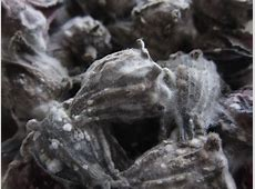 rid body of fungus