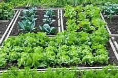 fare l orto in giardino orto in pochi metri 10 consigli come e cosa piantare