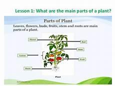 plants worksheets grade 2 13553 plants 3rd grade