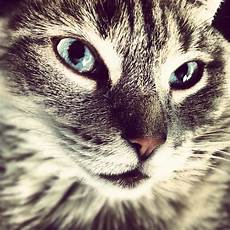 free stock photo of cat kitten pet