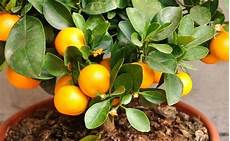 Fruitiers Et Petits Fruits Vente Arbres Fruitiers