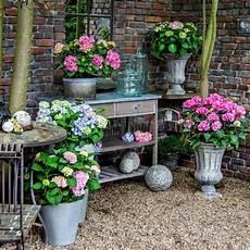 wie schneidet hortensien endless summer hortensien pflanzen und pflegen mein