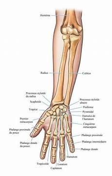 Douleur Poignet Droit Fracture De L Ulna Gauche Ou Droite Poignet Et Radius