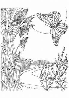 pin auf butterfly coloring