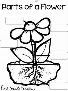 parts of the plants worksheets for grade 1 13716 grade fanatics june 2015