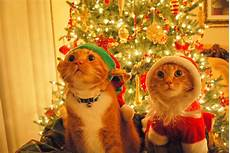 funny cats christmas cats