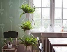 fiori a casa piante e fiori per decorare casa ecco 15 idee green