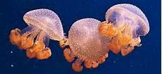 Hewan Laut Yang Harus Dihindari Saat Snorkeling Dan Diving