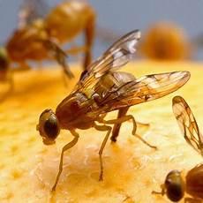 fliegenbek 228 mpfung tipps gegen fliegen ace zydek