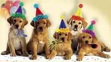 Happy Birthday Dogs Singing