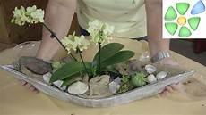 Hauswurz Deko Ideen - sideboard dekorieren traumschiff mit orchidee