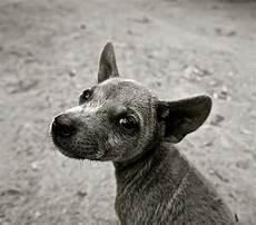 hund ja oder nein hund kastrieren ja oder nein