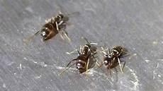 Ameisen Verscheuchen Mit Deo Frag Mutti