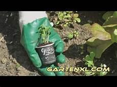 Mein Kleiner Biogarten - rucola salatrauke einpflanzen mein kleiner bio garten